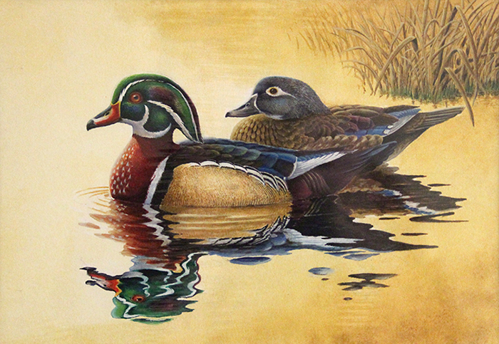 Eric Greene of Mobile, Ala., is the winner of this year's Alabama Waterfowl Stamp Art Contest with his painting of a pair of wood ducks. The winning artwork will be used as the design of the 2019-20 Alabama Waterfowl Stamp, which is required for licensed hunters when pursuing waterfowl in Alabama.