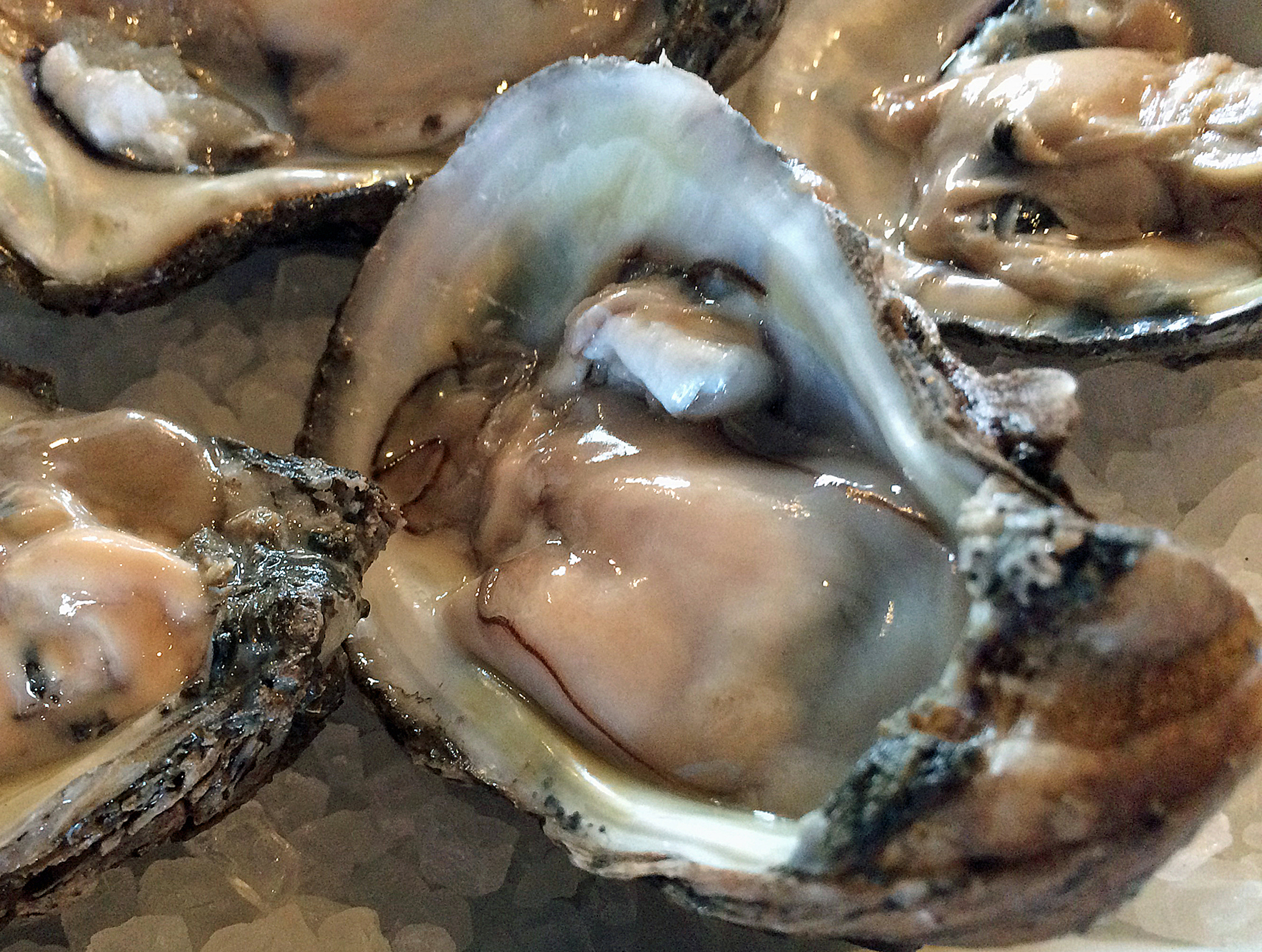 Oyster Management Area Update - Holiday Schedule