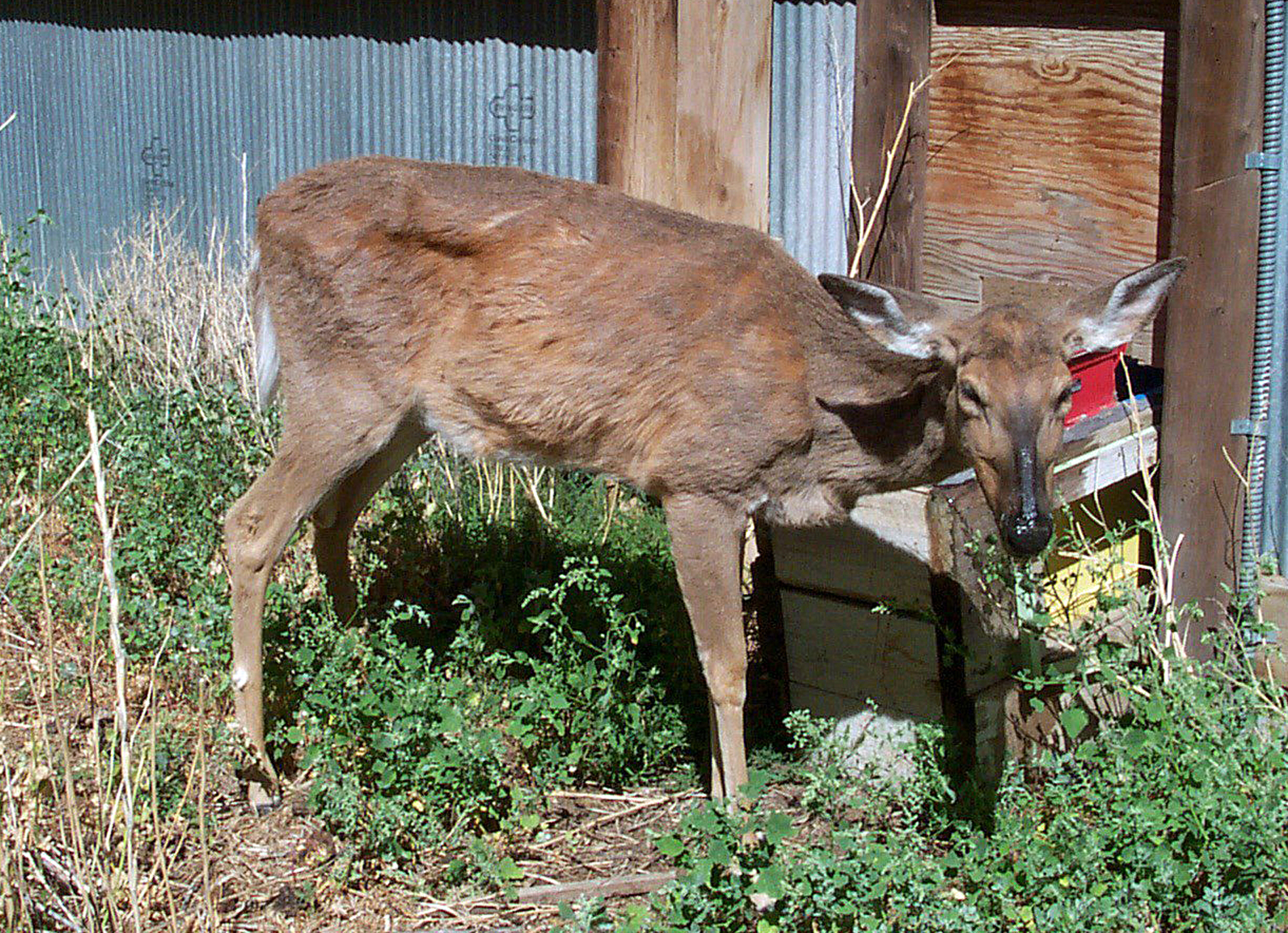 CWD Positive in Mississippi Prompts Quick Response | Outdoor