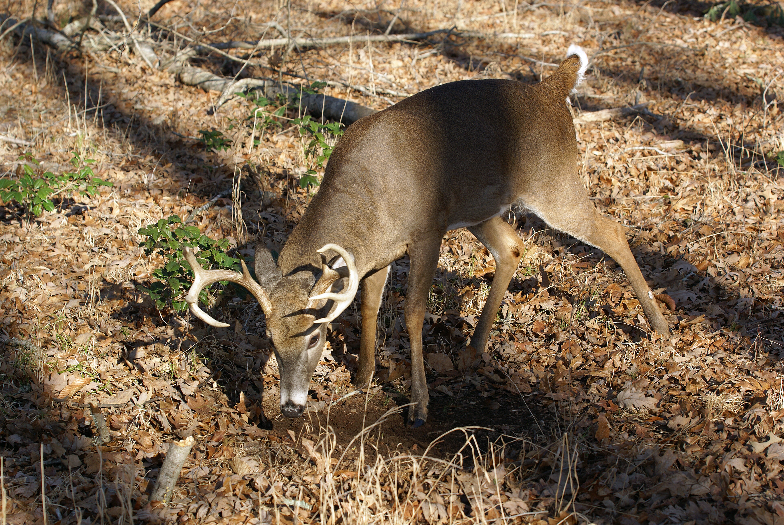 Tips for Hunting the Rut in Alabama
