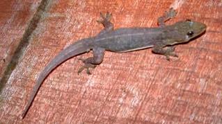 Lizards Outdoor Alabama