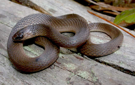 Snakes By Color | Outdoor Alabama