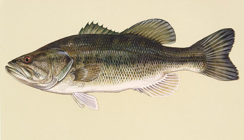 Spring Fishing Tips Outdoor Alabama